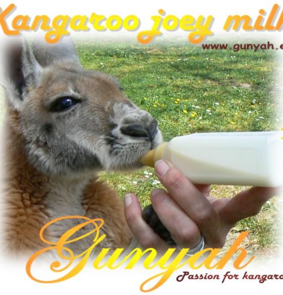 etiket kangaroo joey milk